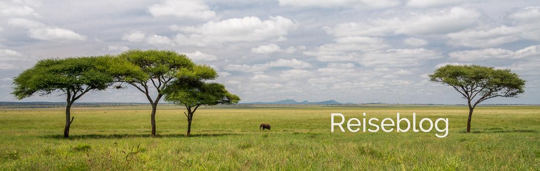 Savanne mit Elefant und Schirmakazien