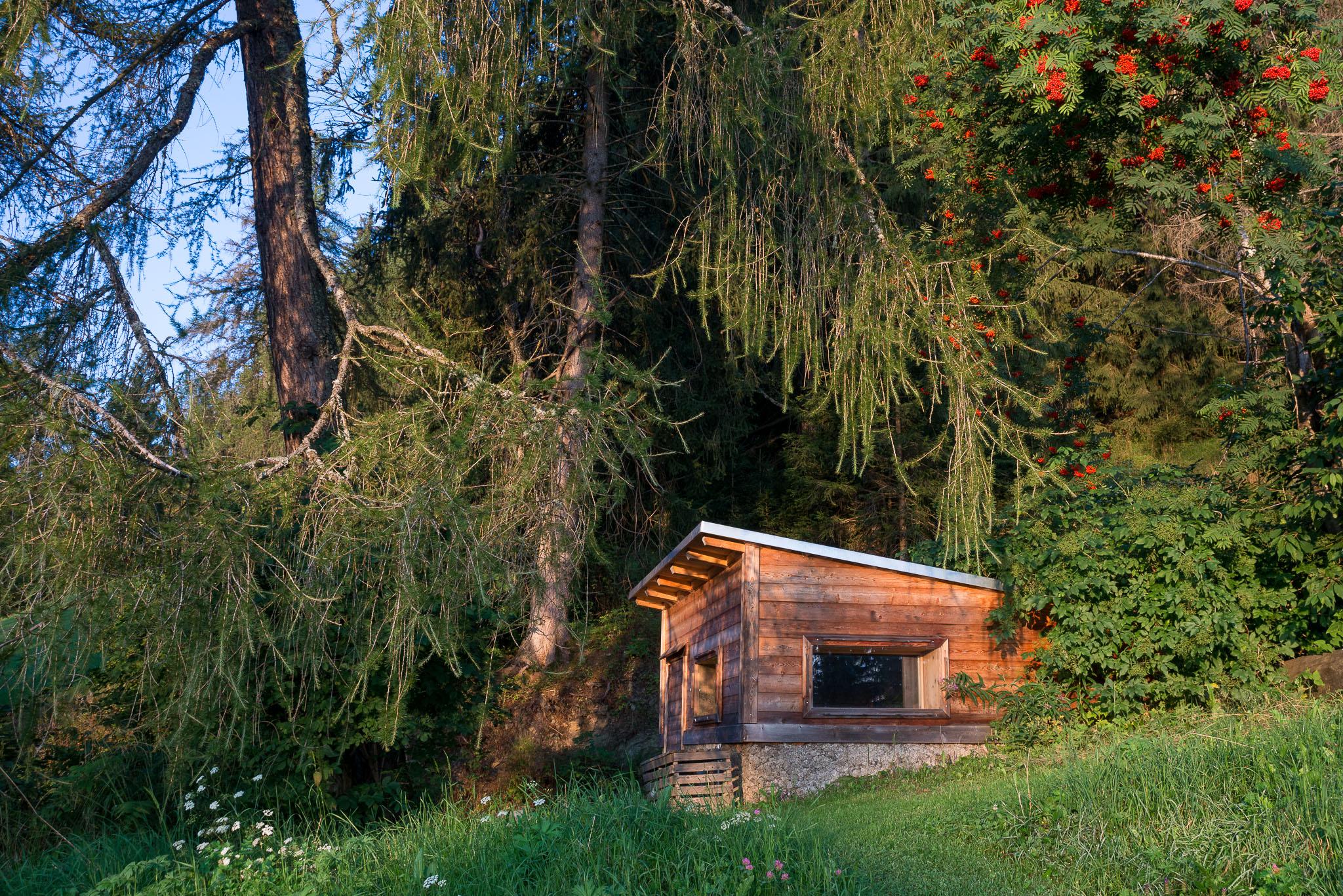 Die Waldsauna liegt versteckt unter Lärchen und Ebereschen.